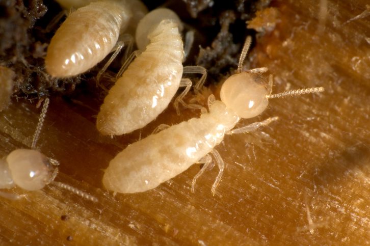 orlando termite treatment