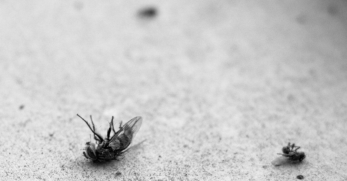 How To Prepare For Active Insects In Warm Florida Weather