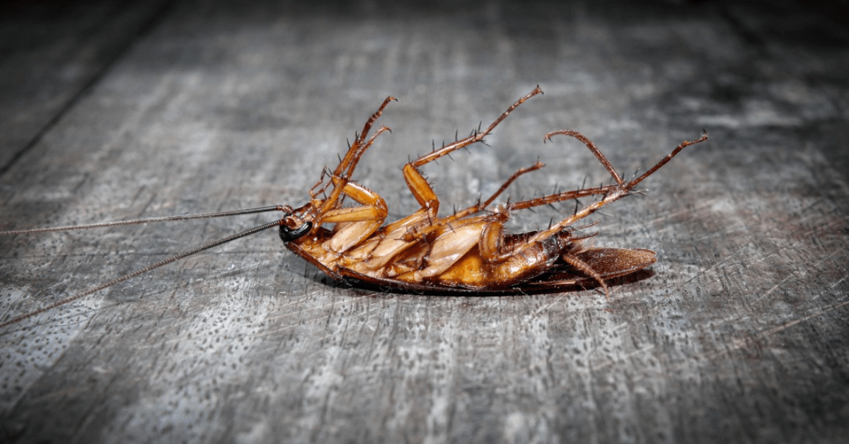Roaches Can Be More Dangerous Than You Think