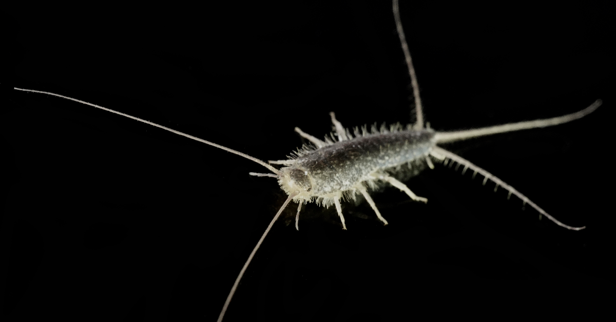 Fish Out Of Water | Silverfish Pest Control Orlando Needs This Holiday Season