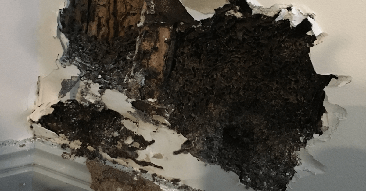 Are You Unknowingly Attracting Termites?