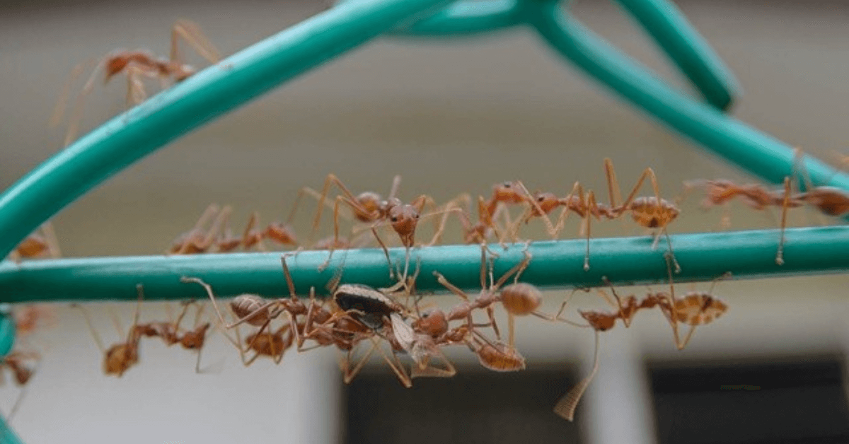 How Weather, Heat, and Rain Affects Florida's Ants and Roaches and Drives Them into your Home