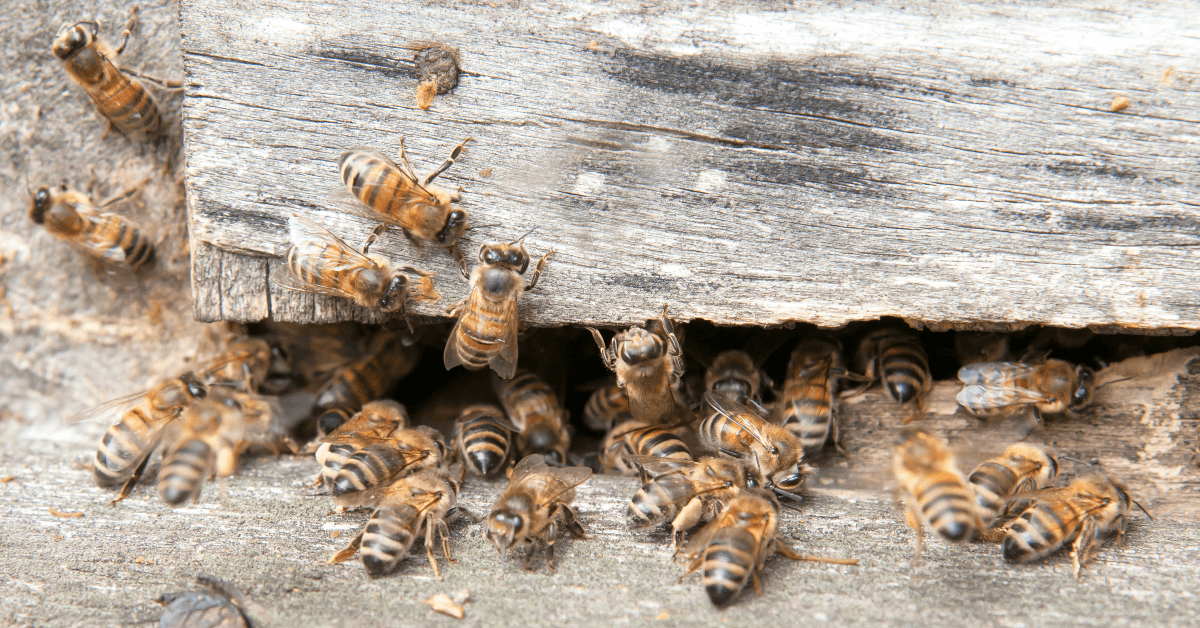 Wildlife Control: 6 Tips to Safely Deter Bees